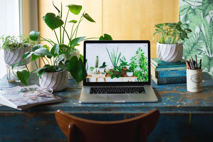 plants home youtube