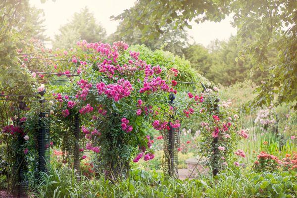 plants english garden