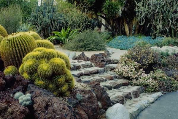cactus plants grow