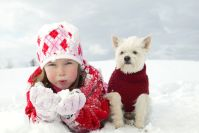How to Wash Dog Sweaters, Collars and Bedding