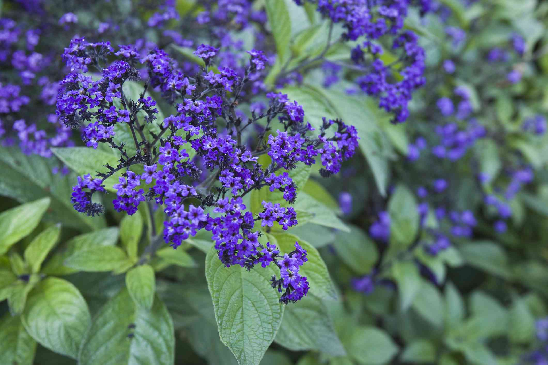 14 great landscape plants
