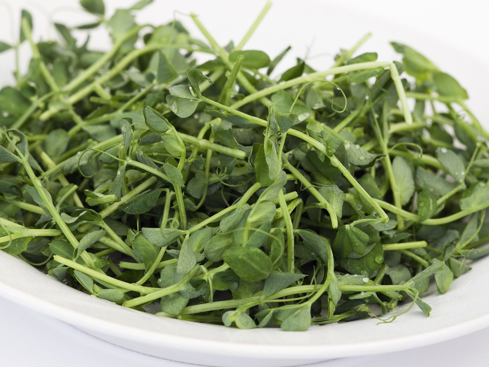 How To Grow Pea Shoots And Tendrils