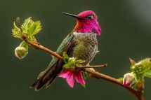 Easy And Safe Perches Hummingbirds