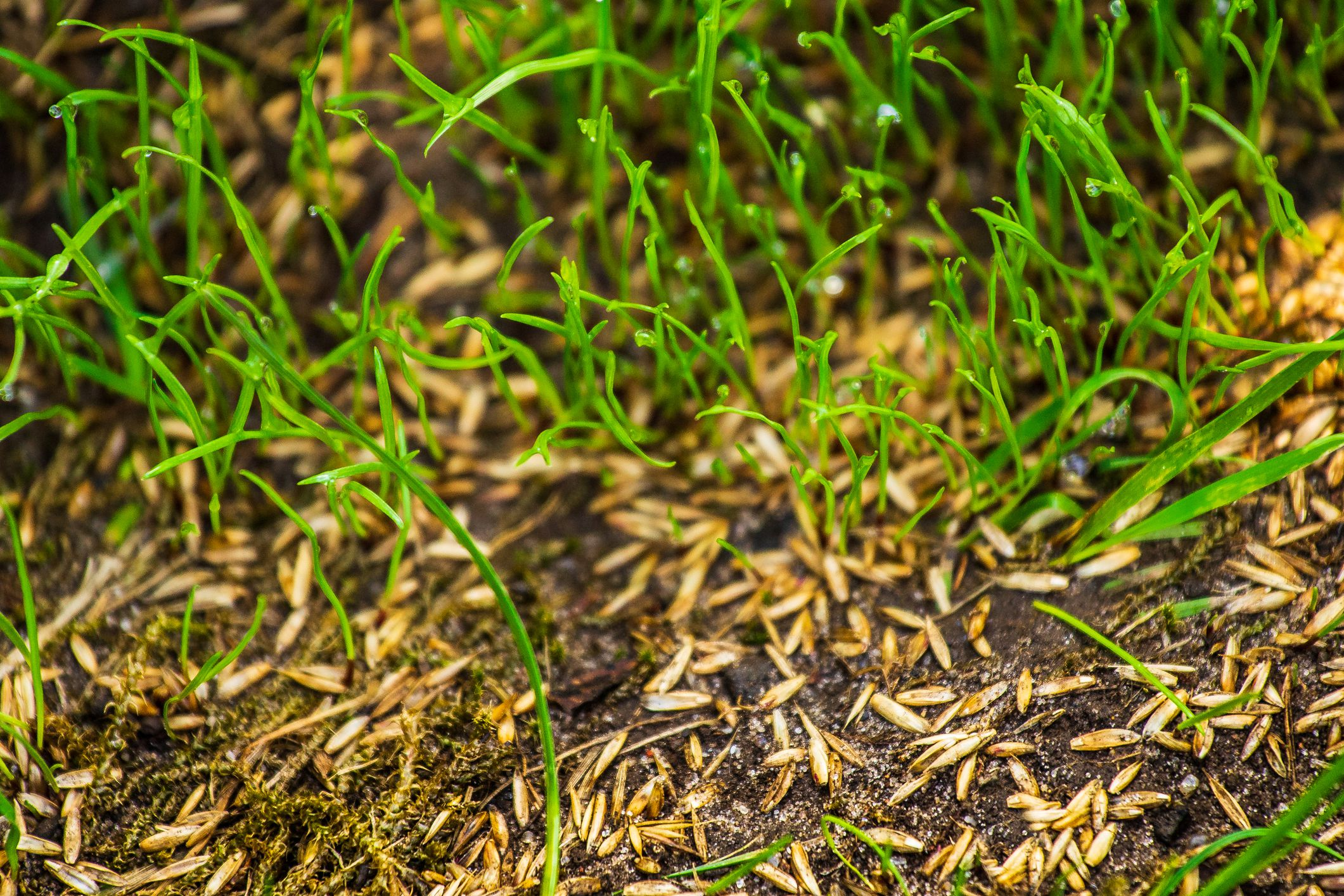 The 9 Best Grass Seed For 2019