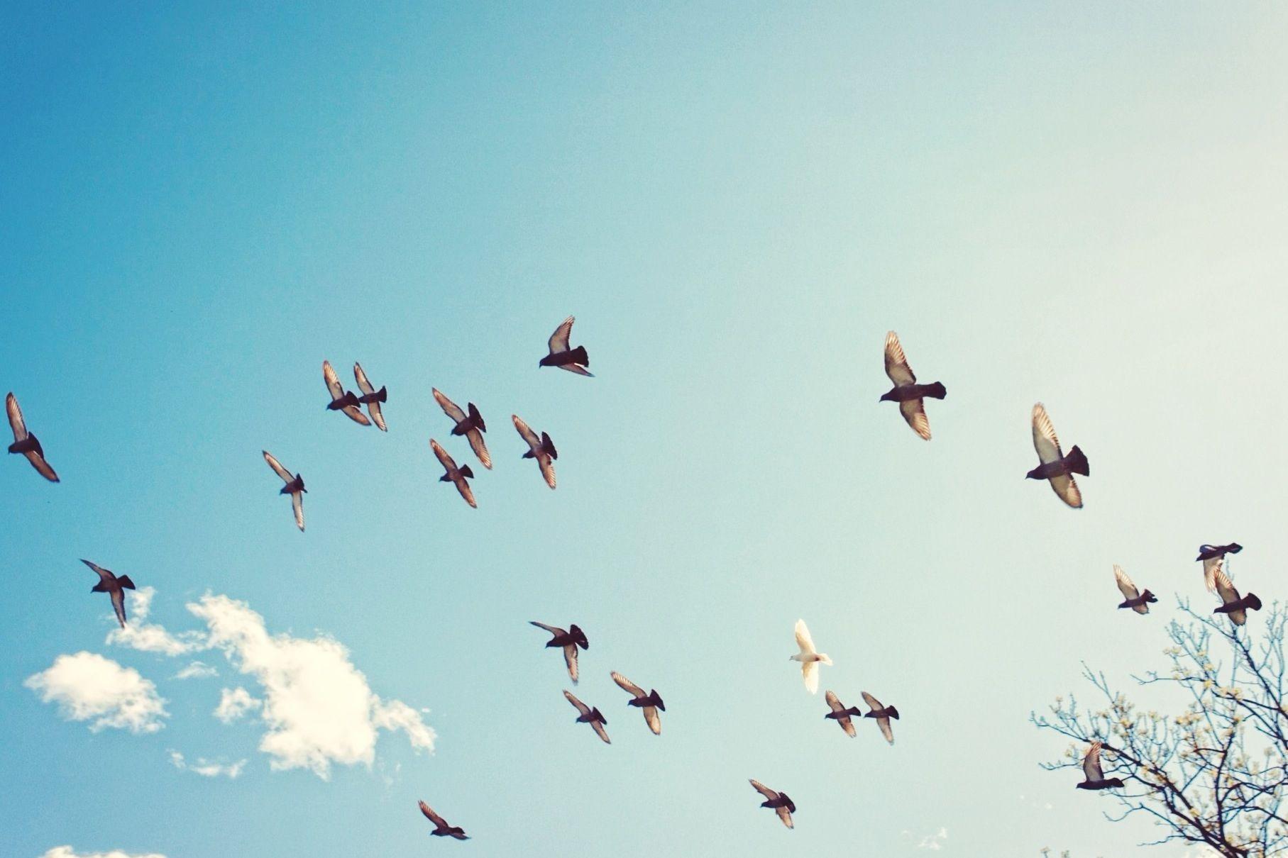 Types of Bird Foraging Behaviors