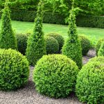 11 Best Topiary Plants To Grow