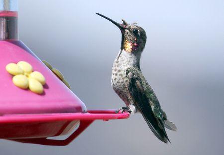 hummingbird diagram of color 2002 nissan sentra se r spec v radio wiring parts a anatomy perched