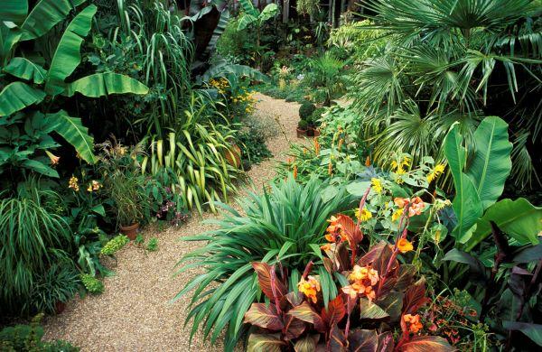 tropical flowers grow