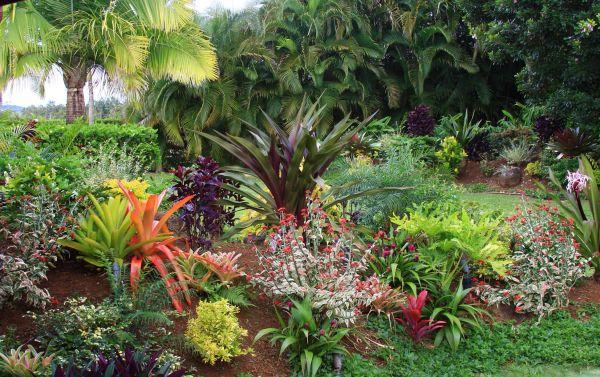 tropical flower garden design ideas