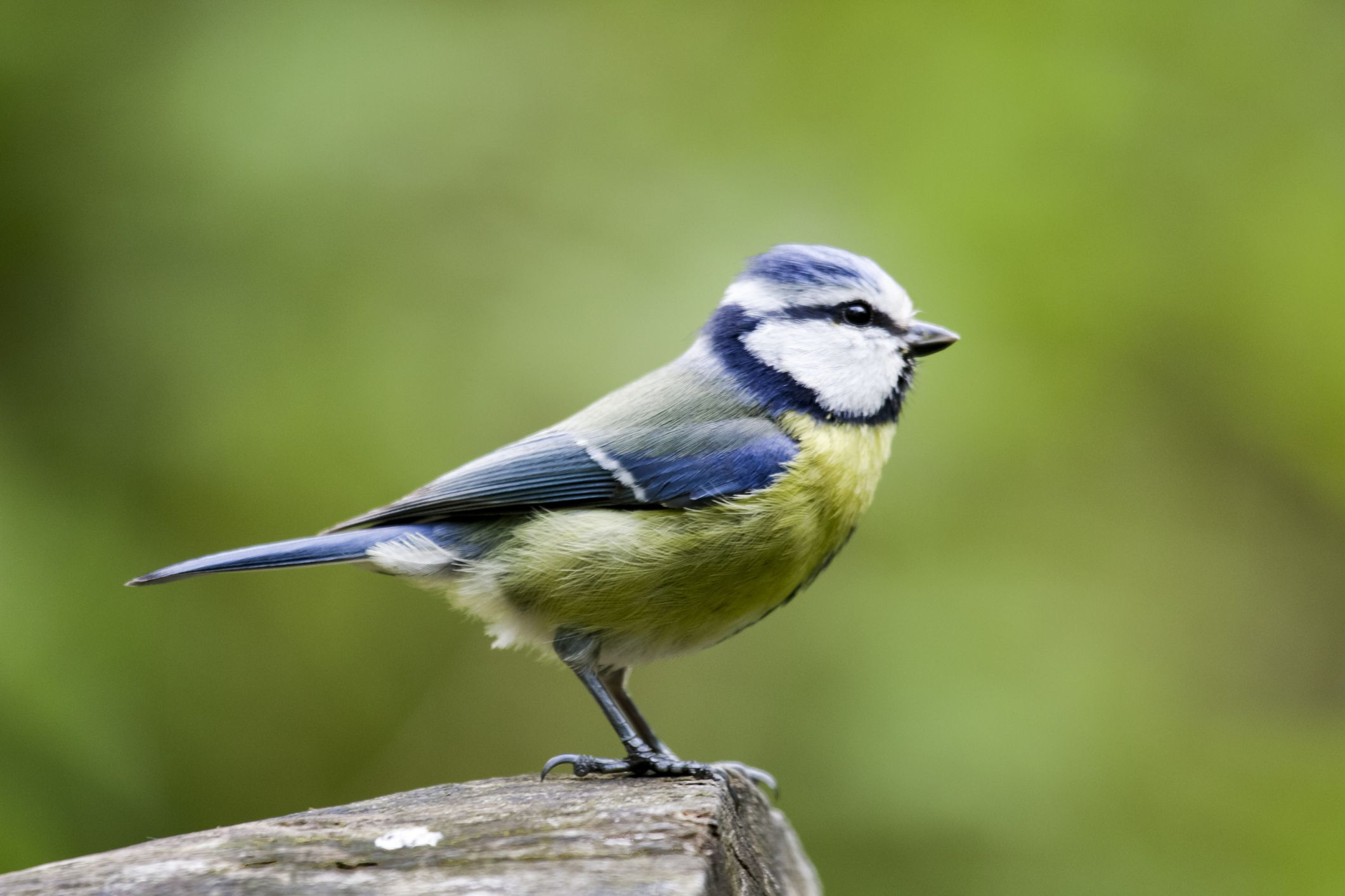 Parts Of A Bird