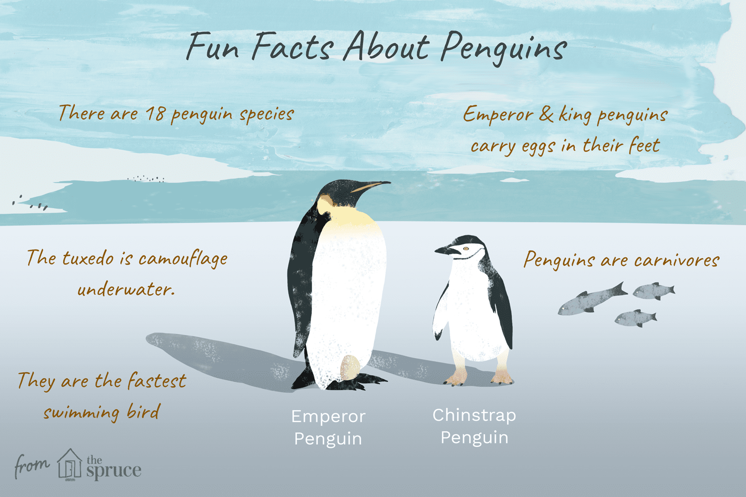 Fun Facts And Trivia About Penguins