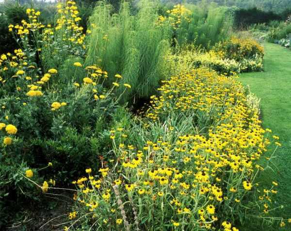 cheerful yellow garden flowers