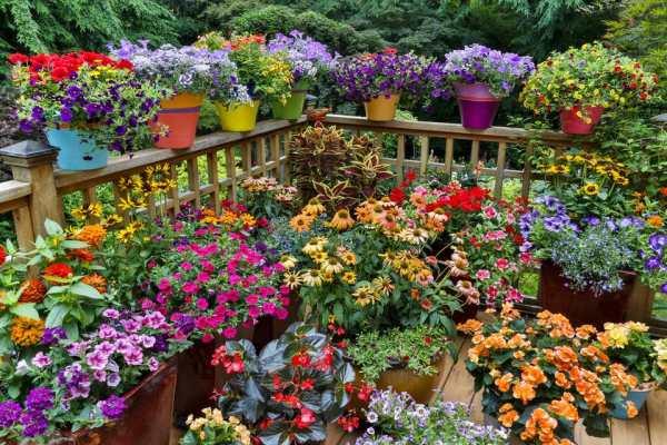 ideas flowering container