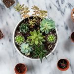 How To Make An Easy Succulent Container Garden
