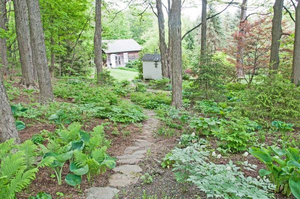 clear wooded backyard
