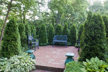 avoid limbing up evergreens