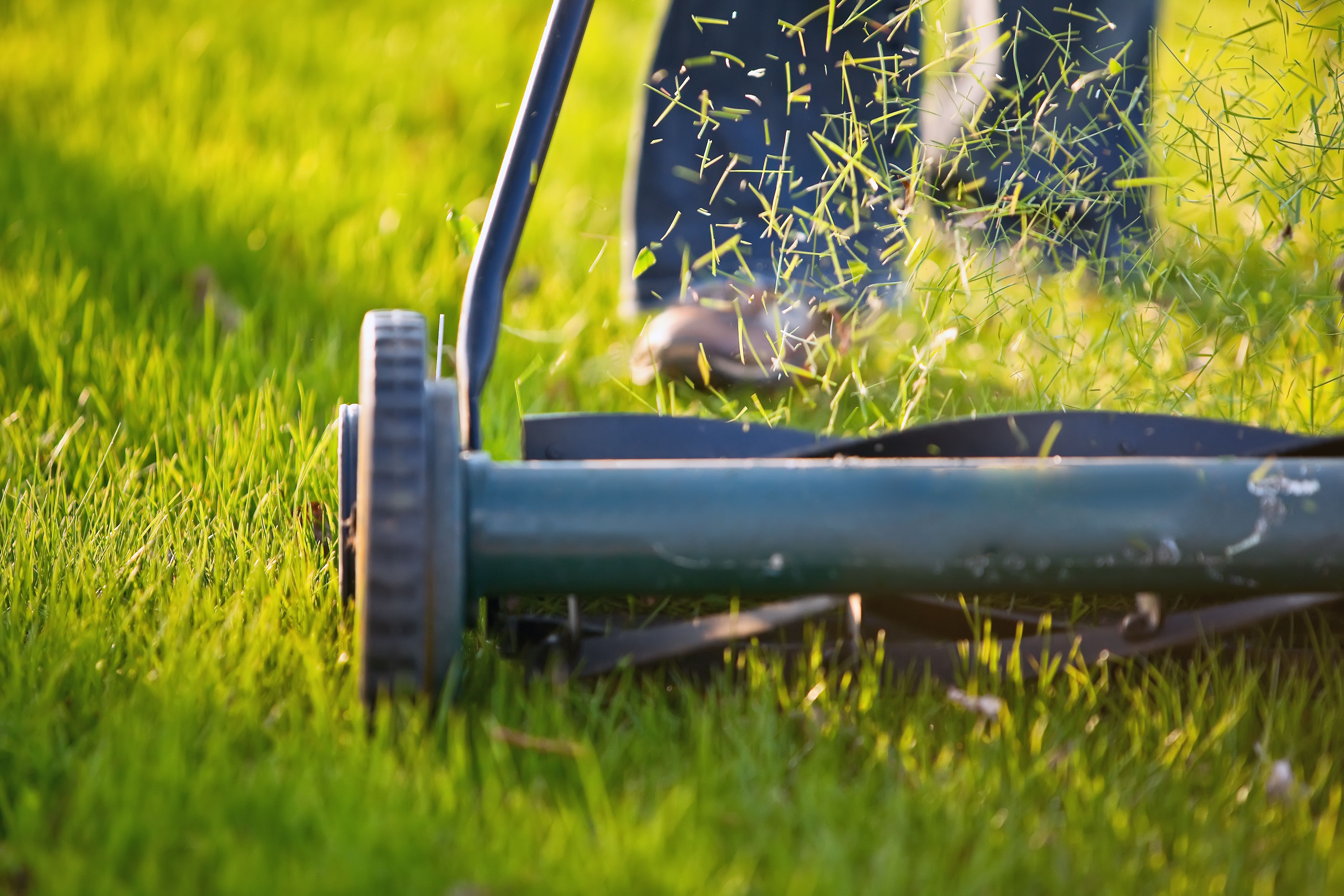 How to Prepare Your Lawn for Spring