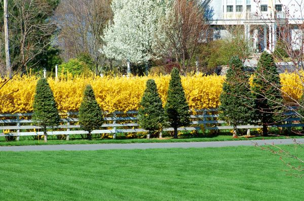 design ideas front yard landscaping