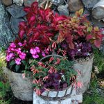 16 Fall Container Garden Ideas