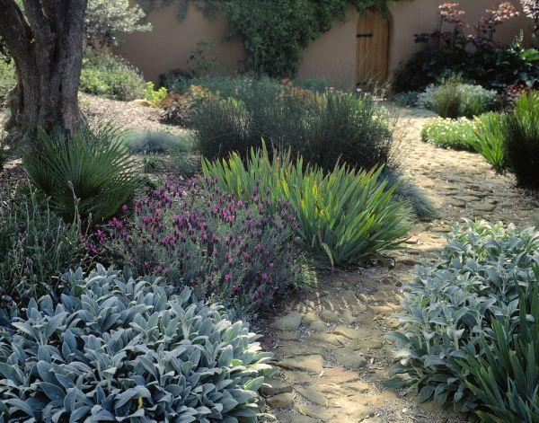 garden design plant texture