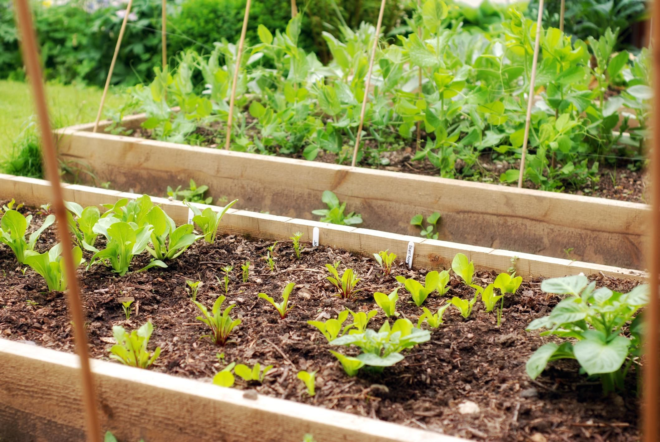 Understanding Companion Plants For Growing Potatoes