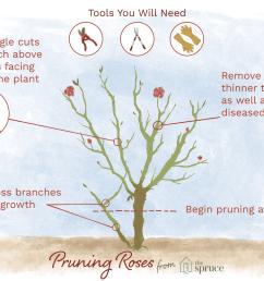 rose leaf diagram [ 1500 x 1000 Pixel ]