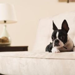 Best Sofa Material For Cat Owners Ekornes Leather Couch Upholstery Choices And Dog