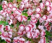 shrub with flowers