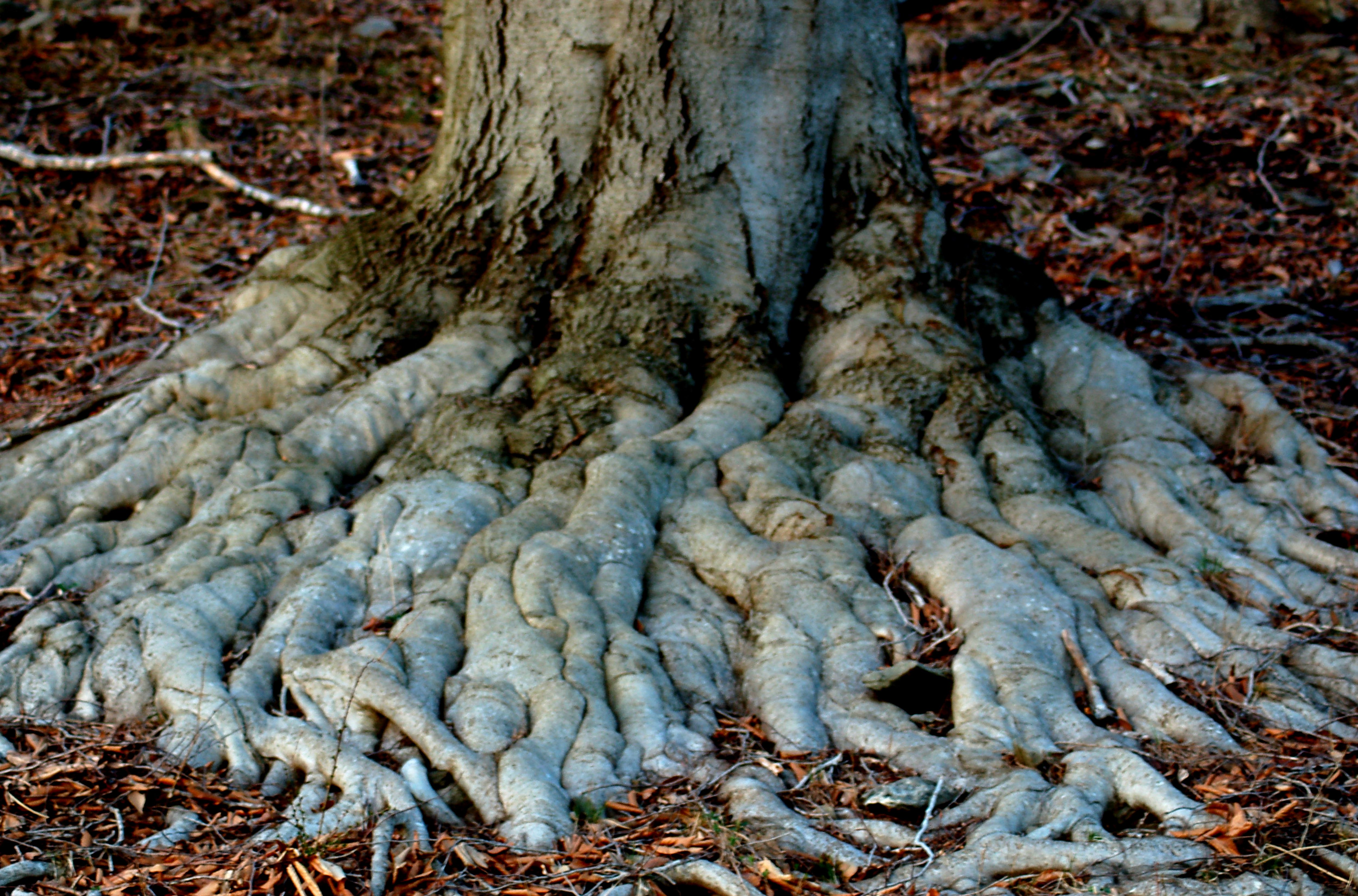 Why You Shouldnt Put Soil Over a Trees Exposed Roots
