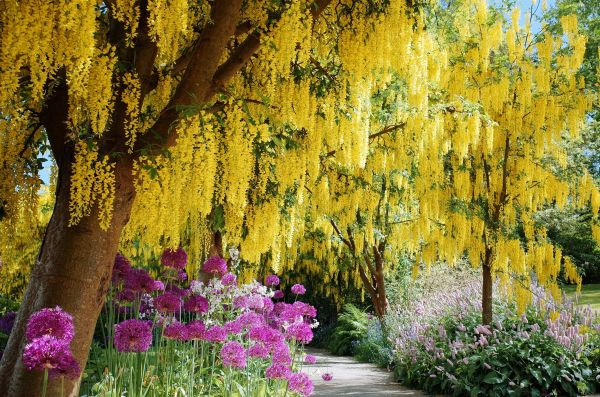 flowering trees landscaping