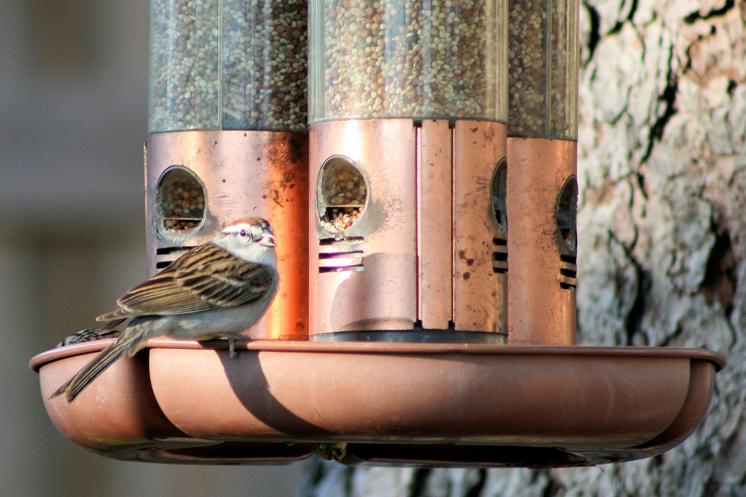 Tips And Tricks To Clean Bird Feeders Safely