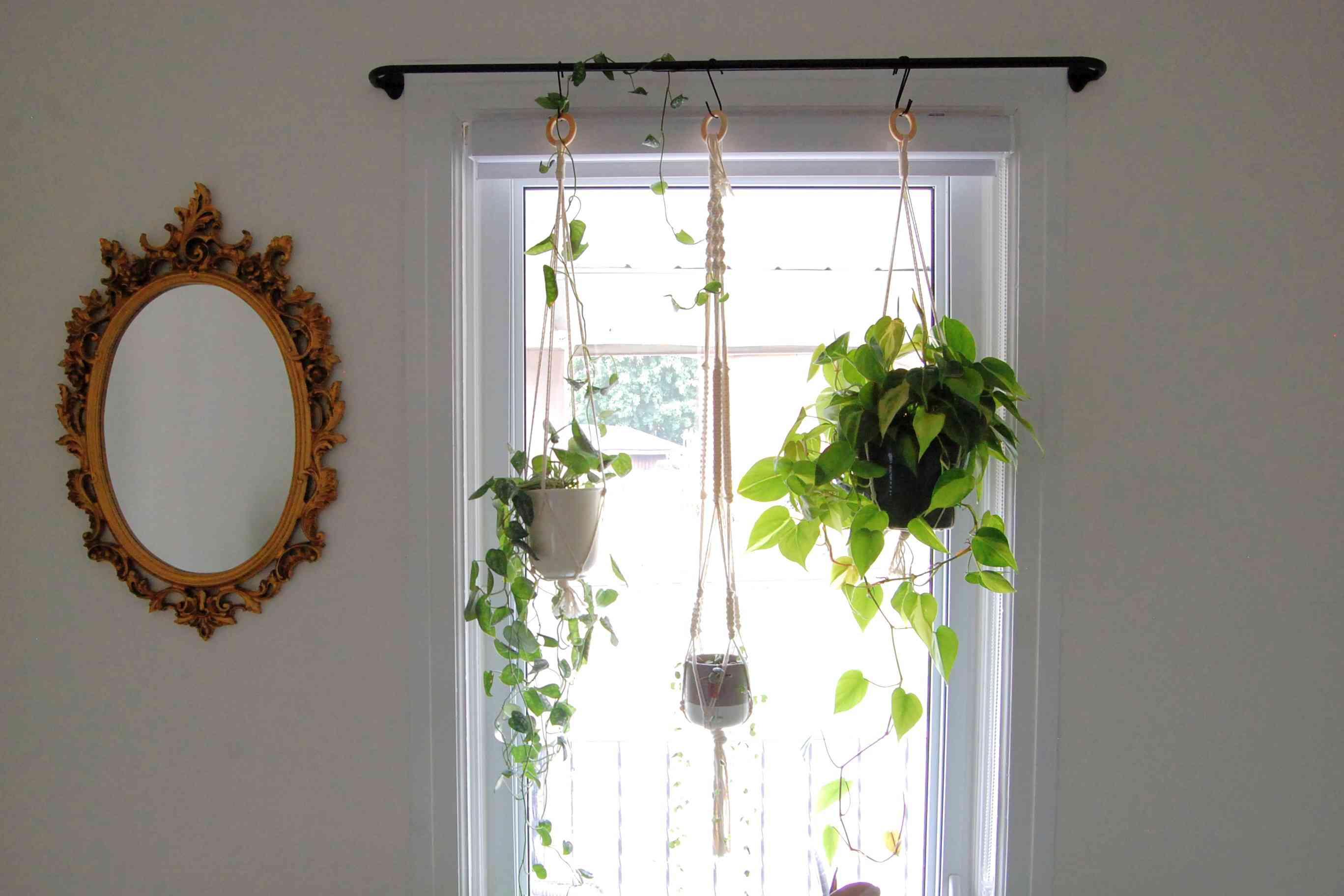 9 unique ideas for a hanging garden