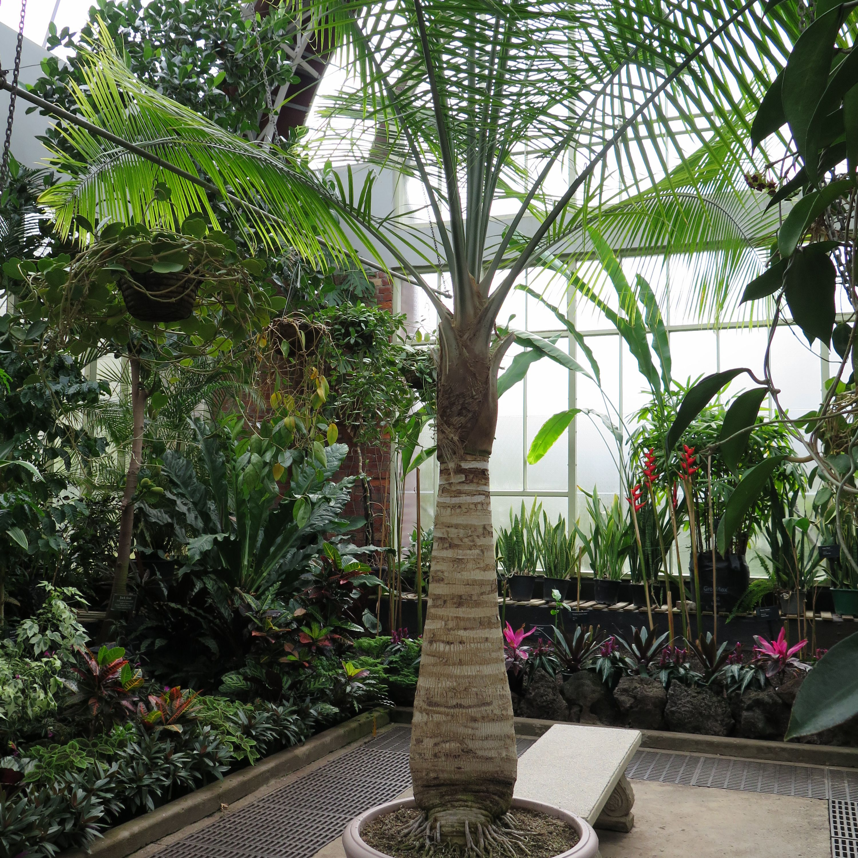 Types of Indoor Palm Plants to Grow