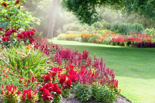 foolproof perennial plants