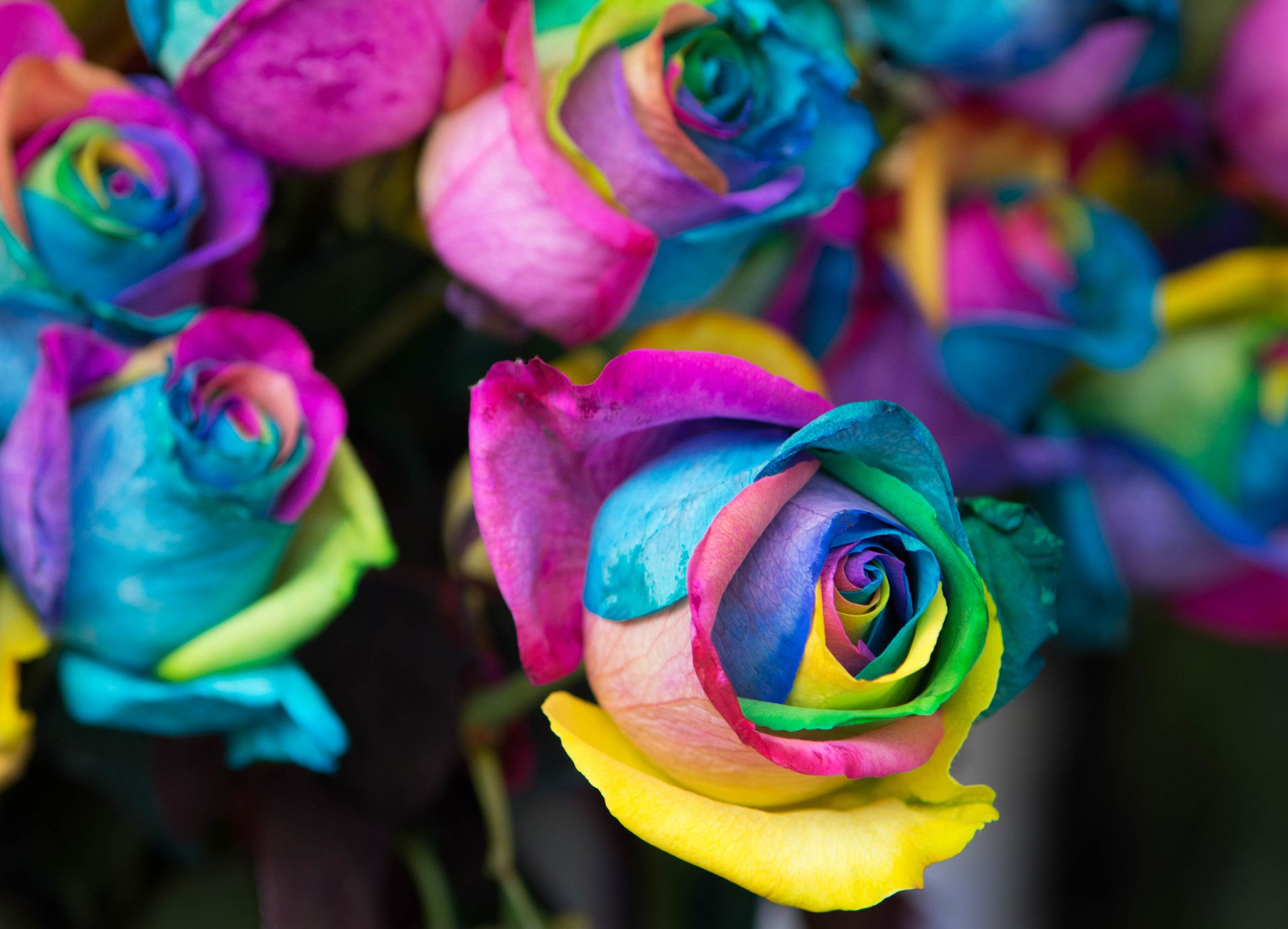How to Create Rainbow Roses