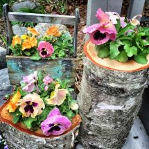 Introduction Unusual Container Gardens