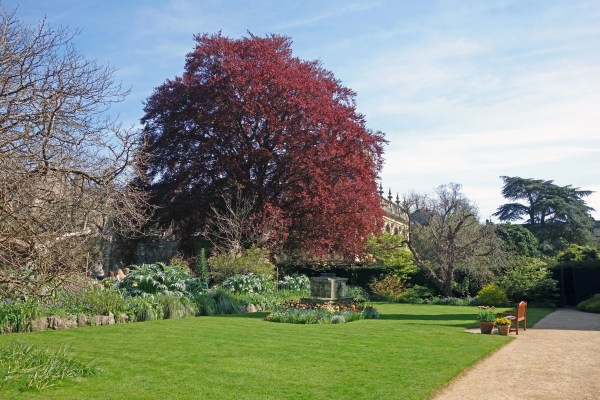 9 landscape trees and shrubs
