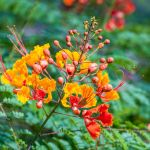 How To Grow And Care For Red Bird Of Paradise