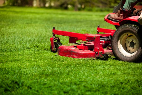 biggest lawn-care mistake cutting