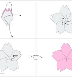 diagram of the cherry [ 1600 x 1066 Pixel ]