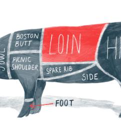 pig body diagram [ 1500 x 1000 Pixel ]