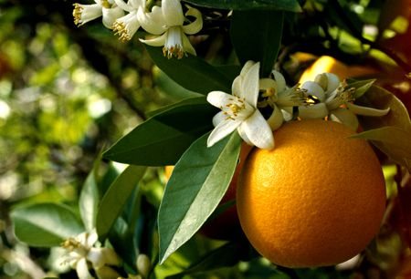 make your own orange