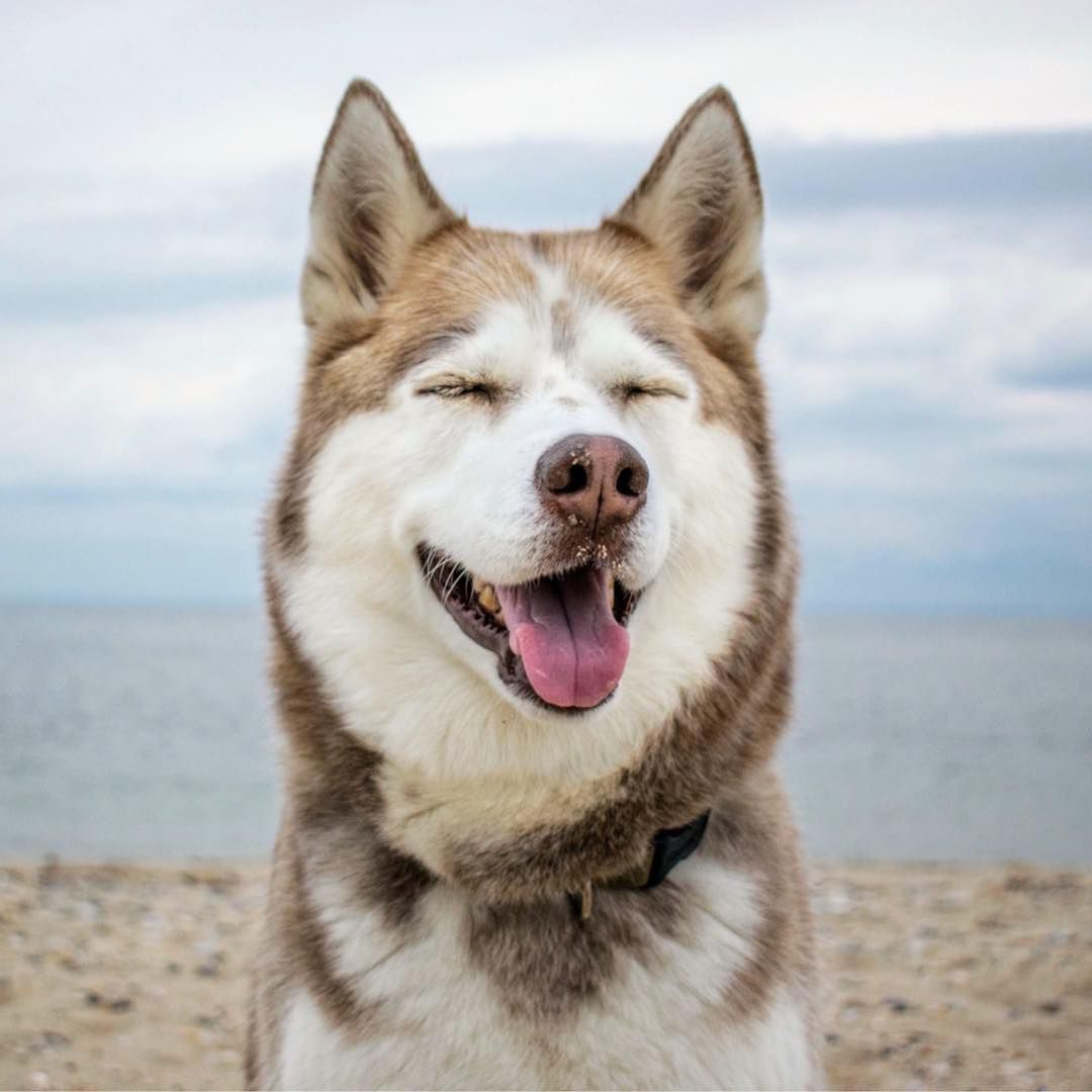 the 16 best dog