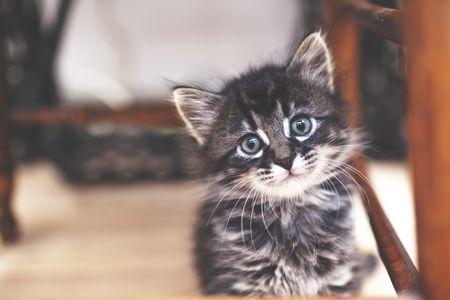 your kitten s development