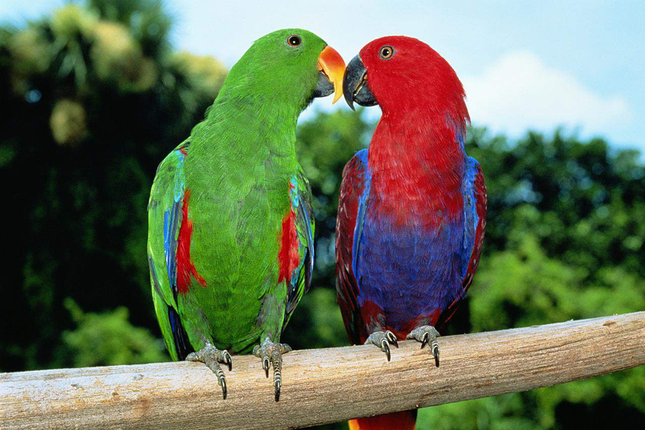 10 most colorful parrot