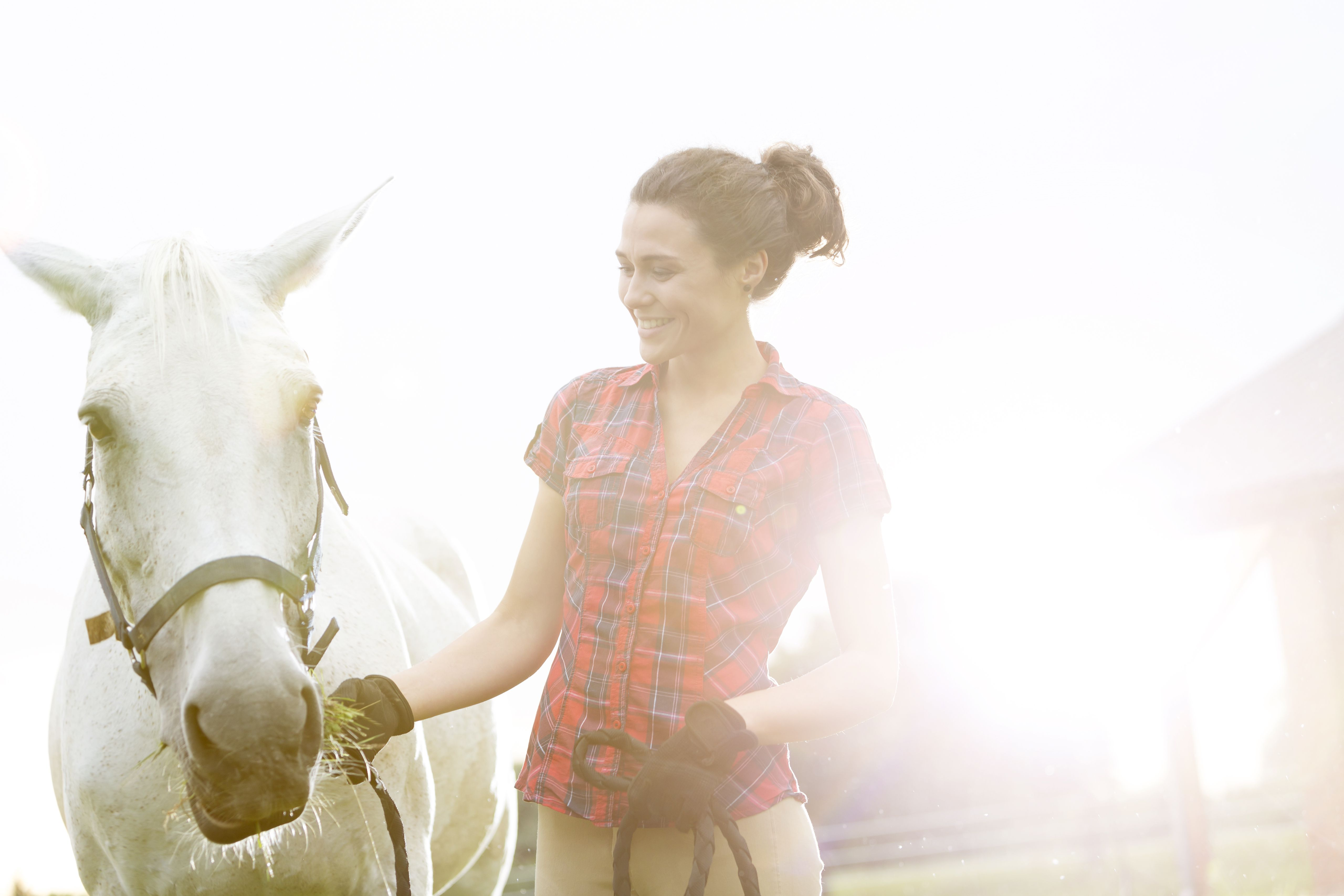 Safety Tips For Working With Horses