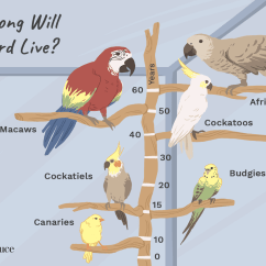 Bird Life Cycle Diagram Boiler Frost Stat Wiring How Long Do Parrots And Other Pet Birds Live