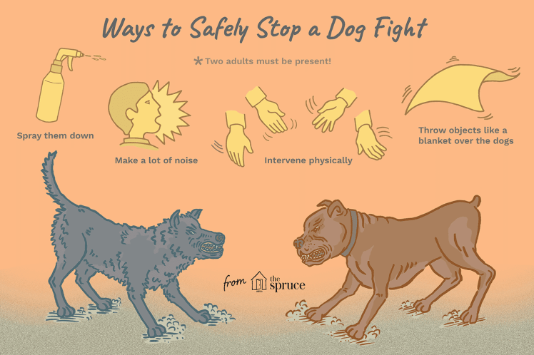 Reasons Why Dogs Fight and How to Safely Stop It before a bite happens
