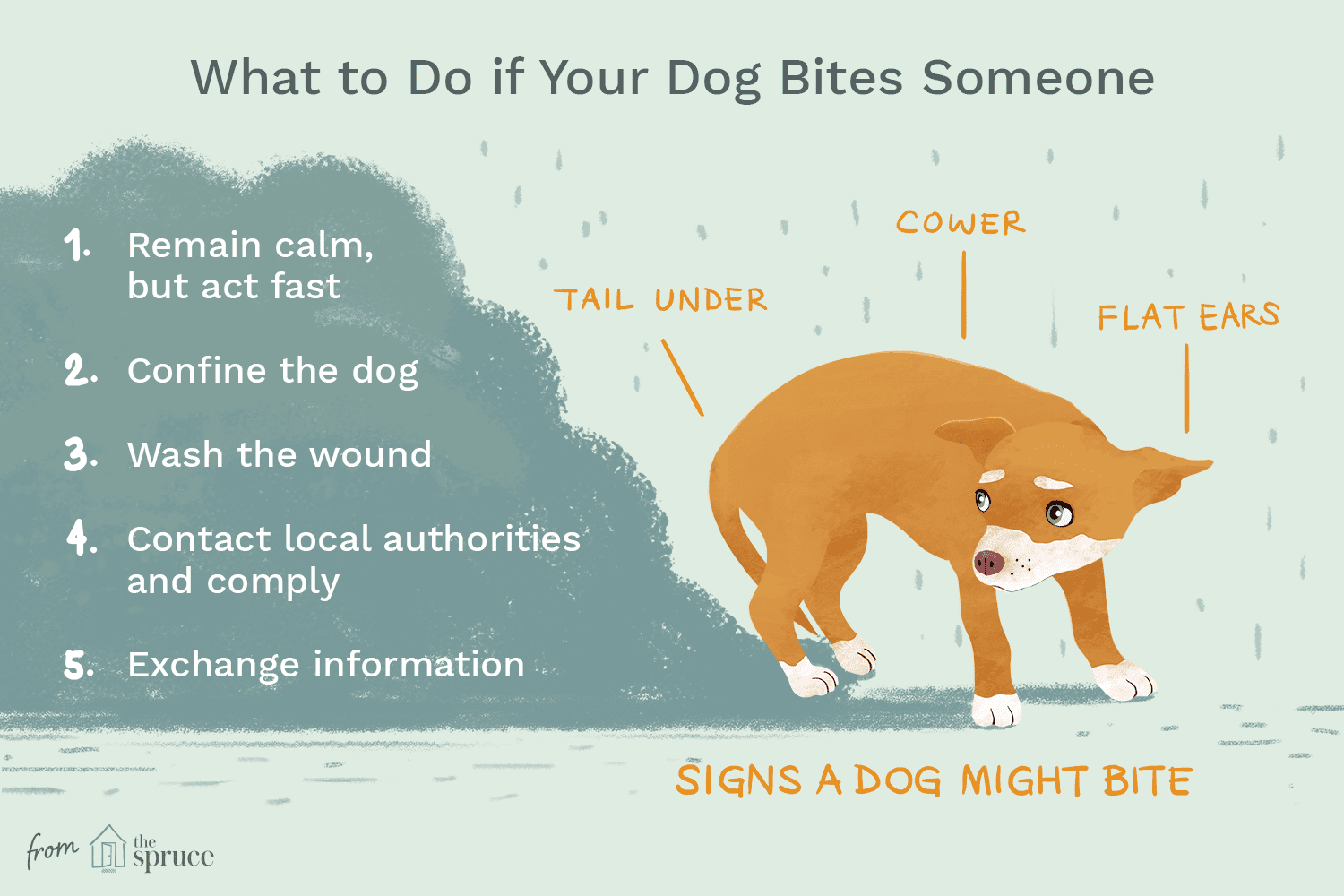 Reasons Why Dogs Bite and How to Stop It