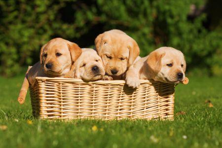 Billedresultat for puppies